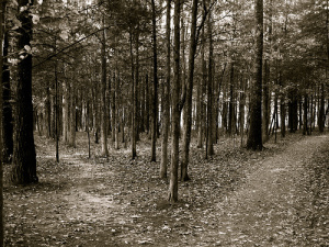 path-less-traveled